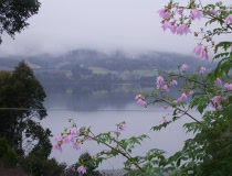 Looking out over the Huon River